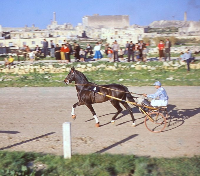 A day at the races at Marsa Race Course