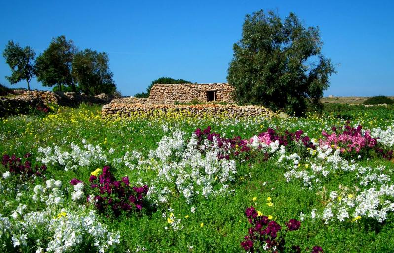 malta countryside spring flowers