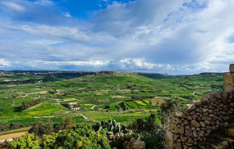 maltese green countryside in spring